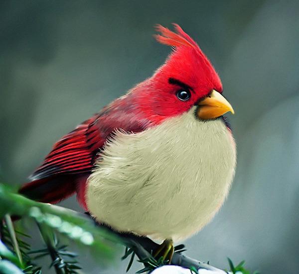 Rojo: el más balanceado de todos
