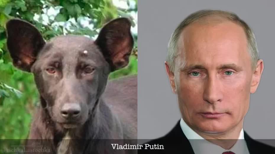 Dog That Looks Like Celebrities