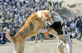 Fotos peleas de perros 59