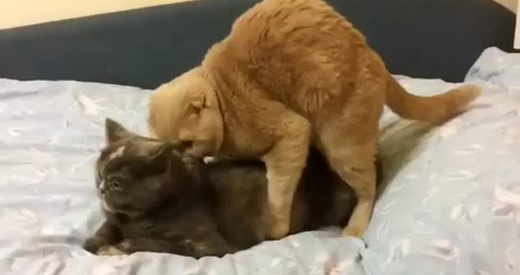 Crazy Cat Mating Gets Extremely Disturbing Twist - Videos ...