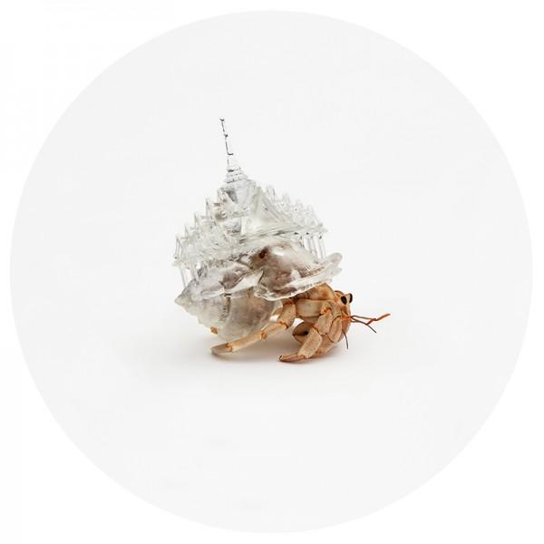 Imprimen en 3D casas para cangrejos ermitaños - Qore
