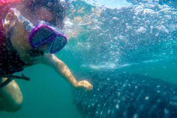 Visitamos al tiburón ballena en Ensenada, una experiencia única...