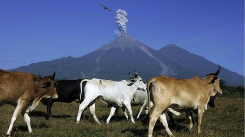 Este año se han registrado 10 erupciones. Fotografía de Getty