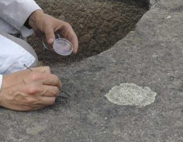 Baja California University Students Create Paint to Restore...