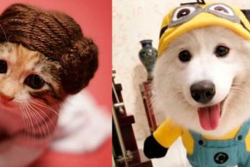 Con estos disfraces tus mascotas se verán terroríficamente adorables