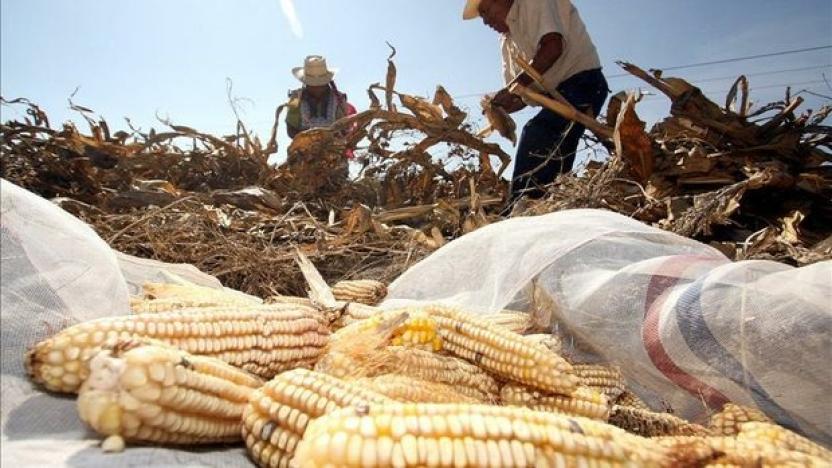 Estados Unidos provee más del 80% del maíz importado a México.