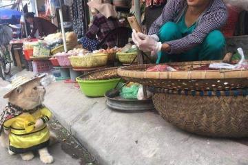 Gato vende pescado en mercado de Vietnam (FOTOS)