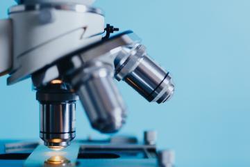 Científicos descubren un nuevo órgano humano: el interstitium