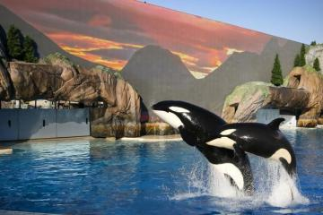 SeaWorld attendance, revenues spike in strong first quarter