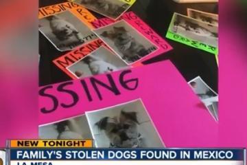 Perros robados en La Mesa aparecen en Rosarito