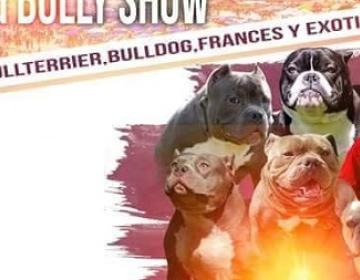 ¡Amante de los perros! No te pierdas el 9no Rosarito Pitbull y...
