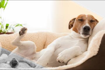 ¿Te has preguntado que es lo que sueña tu perro?