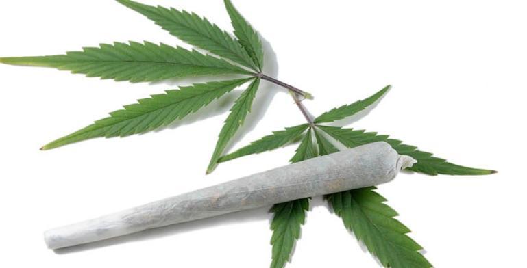 La mariguana previene el envejecimiento del cerebro