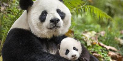 Nacidos en China: Top de críticas, reseñas y calificaciones