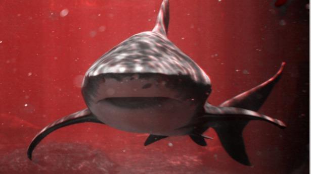 Los mercados saturados han sido comparados con un océano sangriento lleno de tiburones