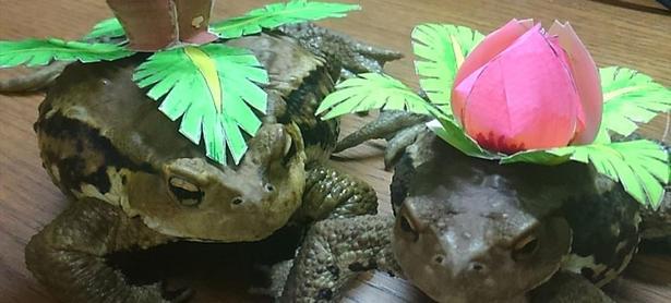Disfrazan a ranas como Ivysaur y Venosaur