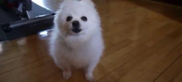 Falleció Gabe The Dog, mascota reconocida por sus memes musicales
