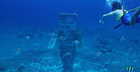 Mojang y jugadores de<em> Minecraft</em> se unen para salvar los arrecifes de coral