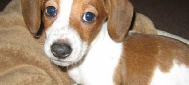 Falleció <em>FrankerZ</em>, el perrito inmortalizado en el clásico emote de Twitch