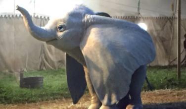 Nuevo trailer del Live-action de Dumbo