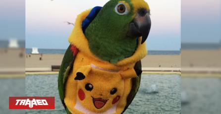Estrenan hilarante sudadera de Pikachu diseñada para Loros mascota