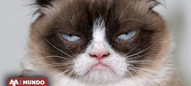 Fallece Grumpy Cat, el afamado gato de Internet a los 7 años de vida