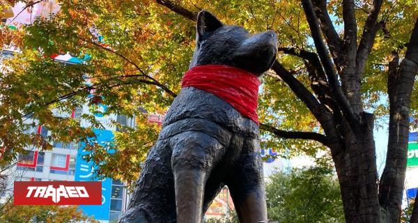 """Enfundan con pañoleta roja estatua de Hachiko en Japón en honor al """"Negro Matapacos"""""""