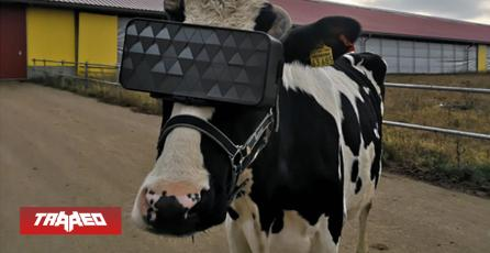 """Vacas usan lentes de Realidad Virtual en Rusia para """"ser más felices"""""""