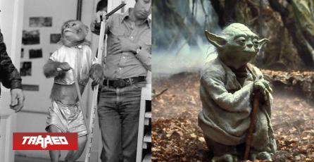 George Lucas quería que Yoda fuera interpretado por un mono en Star Wars El Imperio Contraataca