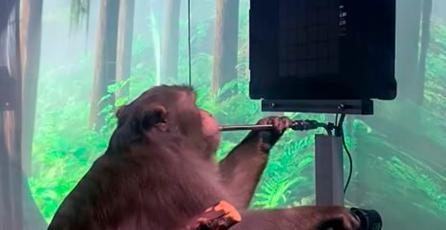 Neuralink, de Elon Musk,  logra que mono con chip implantado juegue Pong