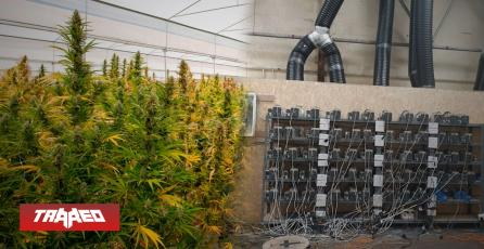 Policía allanó una granja de criptomonedas pensando que era una granja de marihuana