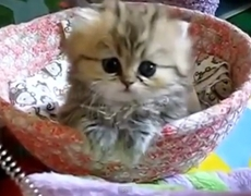 Top 10 Best Cats Videos on Web