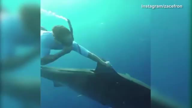 Nadando con tiburones online dating