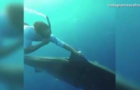Zac Efron y Adam Devine nadando con tiburones en Hawaii