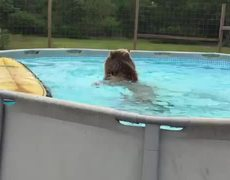 THIS BEAR TAKING A DIVE IN A SWIMMING POOL IS HAPPIER THAN YOU