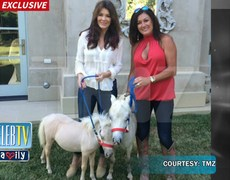 Lisa Vanderpump's New Ponies Fly Private!