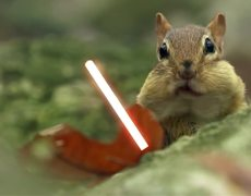 With squirrels parody scene from Star Wars