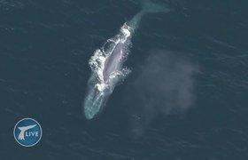 Blue Whale interrupts live interview