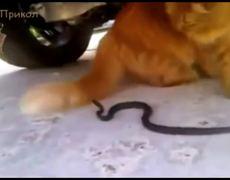 Cat vs Snake (Compilation)