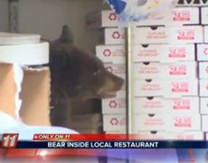 Raw- Greedy bear cub found in the back of a pizza kitchen