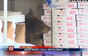 Cachorro de oso en pizzeria