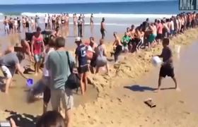 Beachgoers save a great white shark