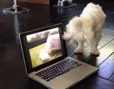 The reaction of the animals to technology