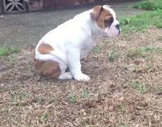 The reaction of a puppy to feel first time the rain