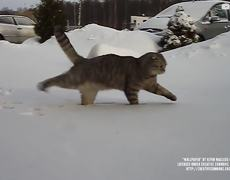 Pets enjoy the snow for first time