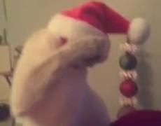 Cat dancing with Santa Hat