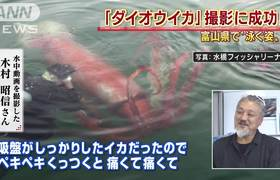 #VIRAL - Giant squid found in Japan