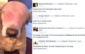 AnimalCruelty: Men burn dog to death in Cuba - Videos - Metatube