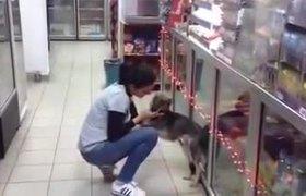 Perro maltratado confia nuevamente en la humanidad
