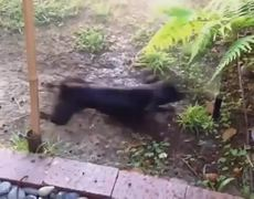 Funny Dogs Compilation 2014